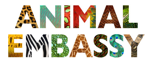 Animal Embassy_blog