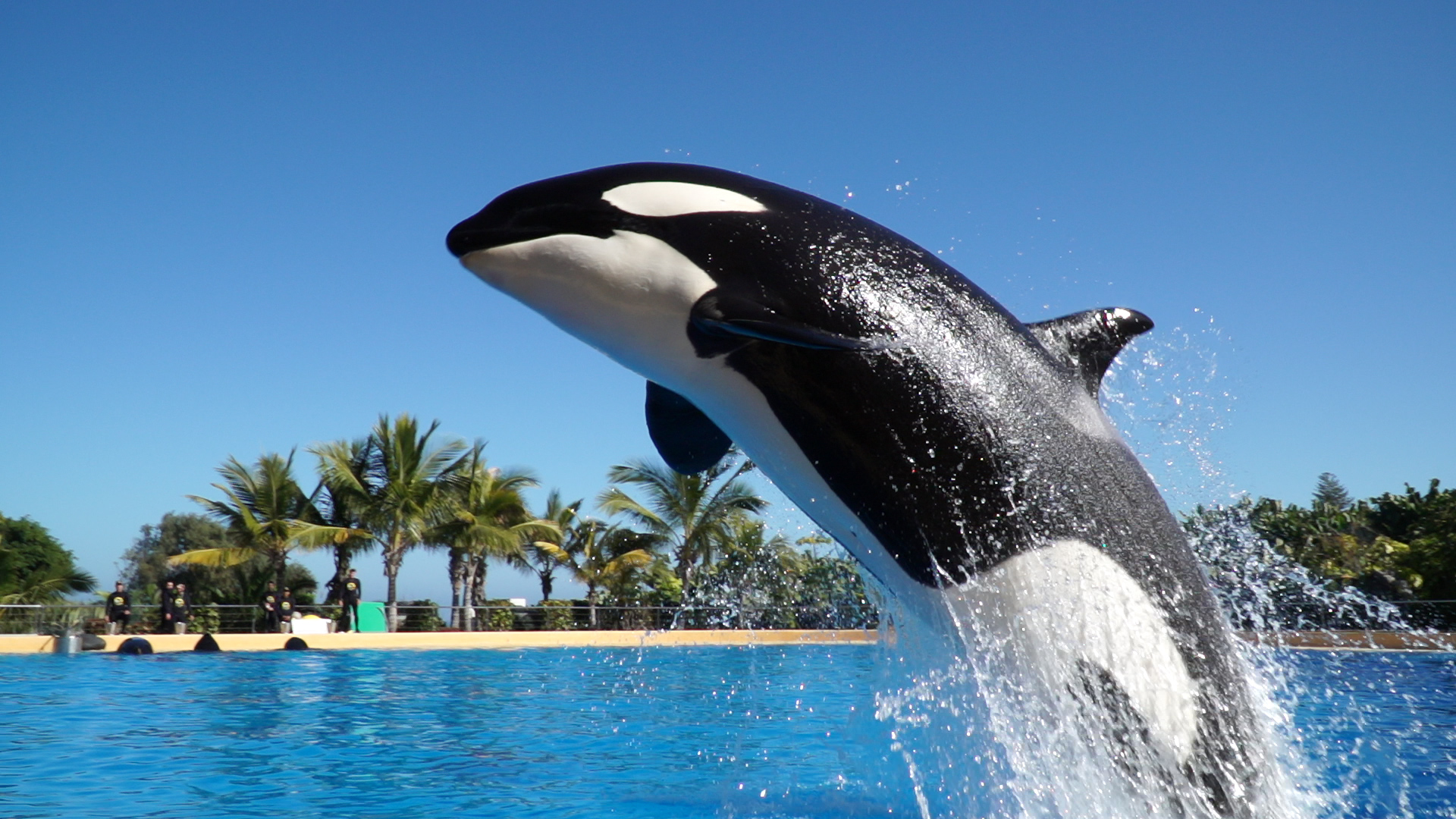 blog loro parque blog archive loro parque anticipates that the
