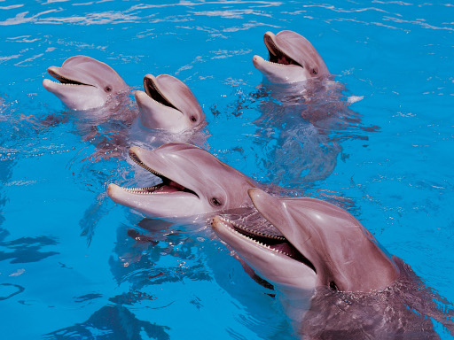 Loro Parque's statement on the new French law on animal welfare